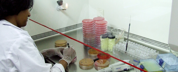 A microbiologist working at the Department of Microbiology of Dhaka Shishu Hospital